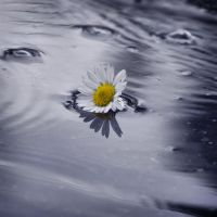 Daisy in water by ThErEaLDoLLyFrikka