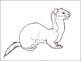 Solitary Weasel by nikkiburr