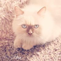 Meow Meow by EliseEnchanted