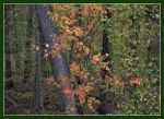 Autumn Colors. D800-2793, with story by harrietsfriend