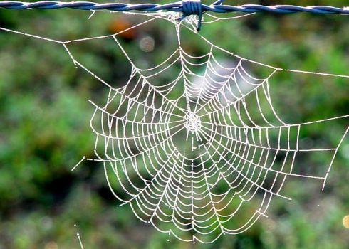 Spiderweb by Suisan