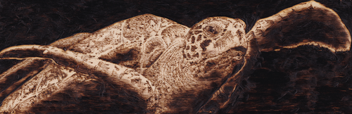 Turtle_Pyrography by zwillhyper