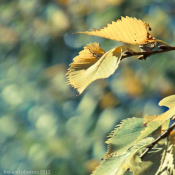 Green - Yellow by fo-pho