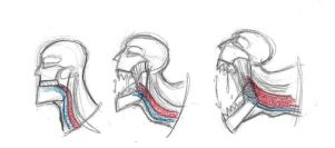 KC Jaw Test by NoctoNommer