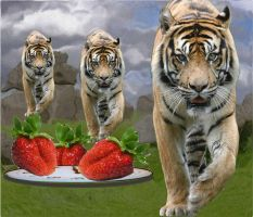 3 Tigers by veronica1999