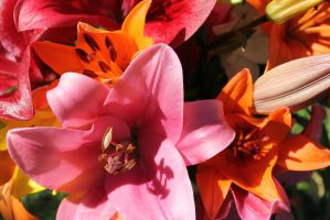 Lillies by ness5378