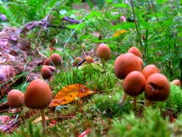 Coloured world of mushrooms by 4ir4o