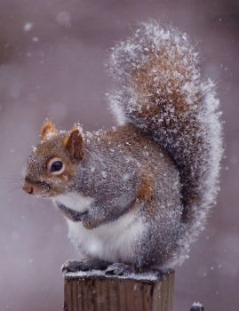Squirrel by CodyClark