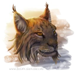 Lynx rufus by boldtSketches