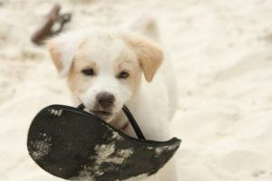 Puppy Beach Play by spaceagejellyhead