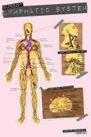 Human Lymphatic System by jlgm25