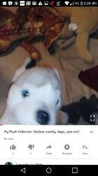 My plush Collection (wolves, dogs Cats)+Video by Gerundive