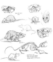 Rat study sketches 01 by Baron-Engel