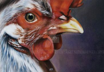 Rooster by Acacia13