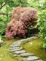 Stepping Stone Path by Alienesse-Stock