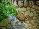 Exploring Tortise by TheGasMan254