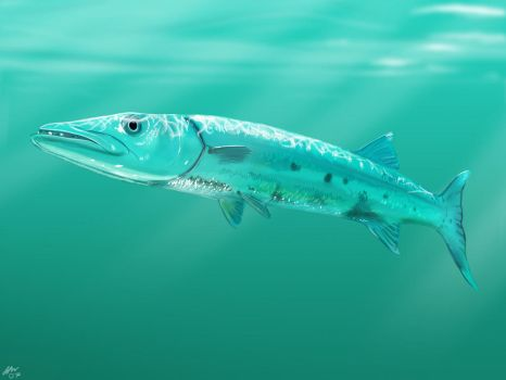 I wrestled a barracuda by wildpaintings