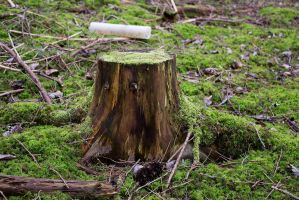 Tree Stump II - Stock Photo by KarvinenStock