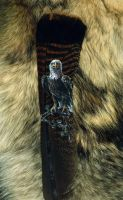 Bald Eagle Featherpainting by Dreamspirit
