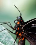 Butterfly2 by PictureByPali