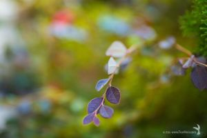 Leafy plant, nature photography by NoirArt