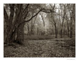 Forest 1 by welder
