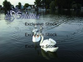 Exclusive Stock :: Swans Package by Selunia
