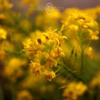yellow power by FlorinALF