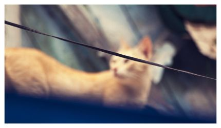 cat on a hot tin roof by abhimanyughoshal
