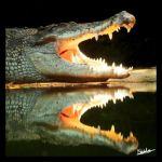 Crocodile Squared by furryphotos