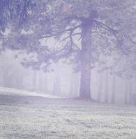 Misty Wood 3 by moonchild-lj-stock