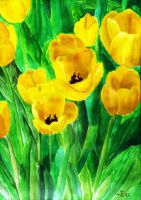 Tulips by lmmi
