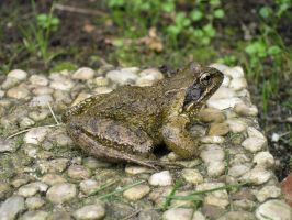 Provisional title, Frog by Dowlphin
