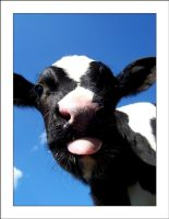Moo 2 by MichelleMarie
