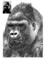 Gorilla by re45on