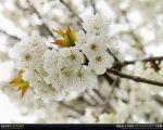 Happy spring by MeAli-ADK