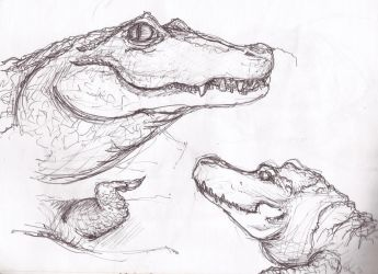 sketch aligators by marinpoppins