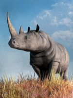Rhino by deskridge