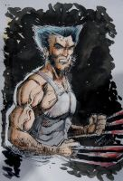 The Wolverine by Noumier
