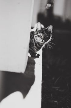 Ristotto by catlover
