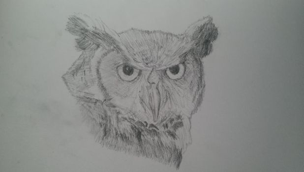 owl by Sabs546
