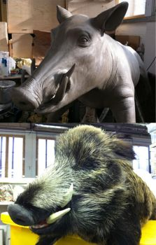 Boar head before and after fabrication by lizthompson