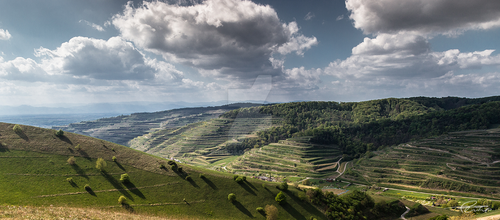 Vine Hills in France by Philip25