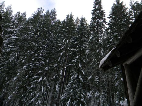 Snowy trees are so beautfiul! by The-Lover-Of-Life