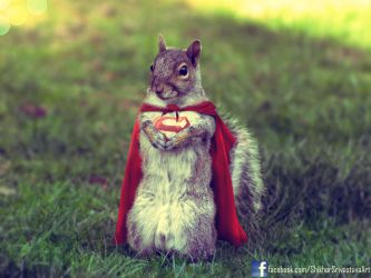 SuperSquirrel - The Last squirrel of Krypton by ShikharSrivastava