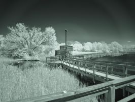 Mel Swart Board Walk 3 (IR) by RuralCrossroads360