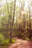 Midmorning Forest by robertllynch