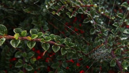 Cobweb III WALLPAPER by Yorphine
