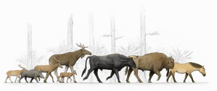 Central Europe's Holocene Megaherbivores by Pachyornis