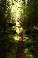 Forest trail by CAStock